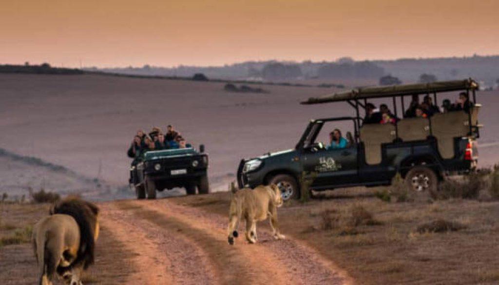 safari na Africa-do-sul