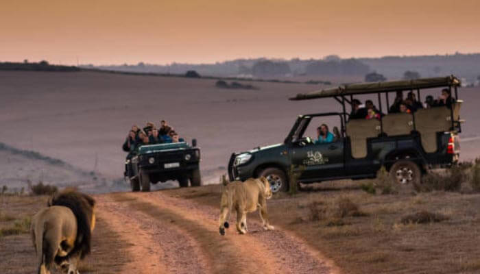 safari na Africa-do-sul