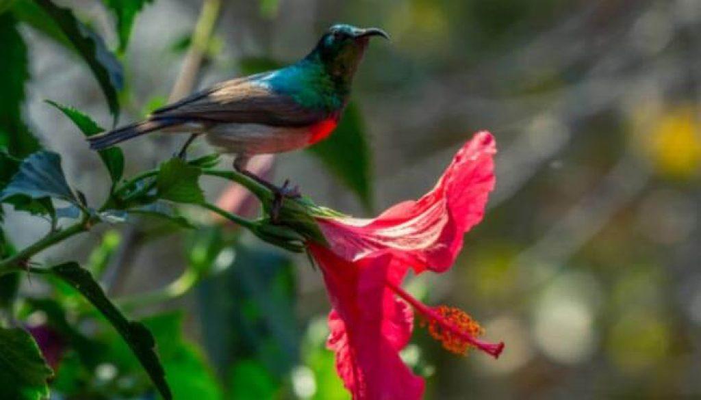 Fauna-do-Zimbabue