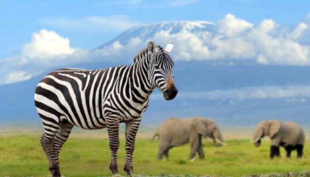 nairobi com Zebras