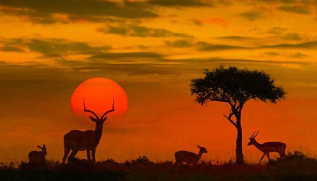 veados-na-Africa-do-Sul