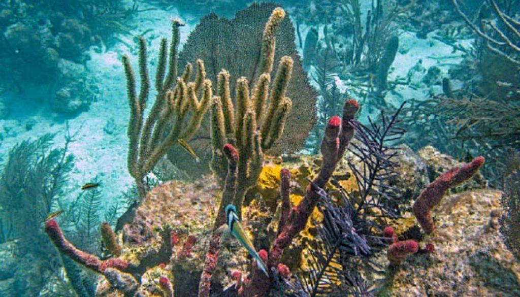 Barreira-de-corais-em-Belize