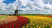 Holanda-thumb