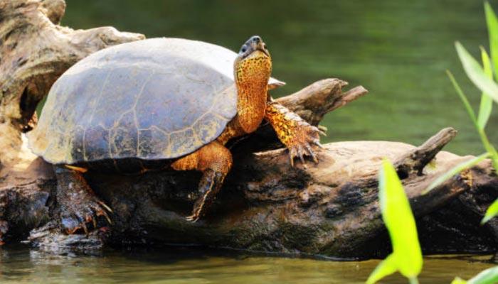 Parque-Nacional-de-Tortuguero-Animais