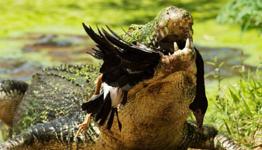 Parque-Nacional-de-Kakadu