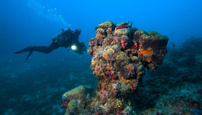 Mergulho-em-Abrolhos