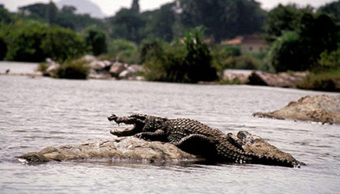 Tour-dos-crocodilos