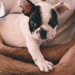 Um-House-sitter-precisa-gostar-de-animais