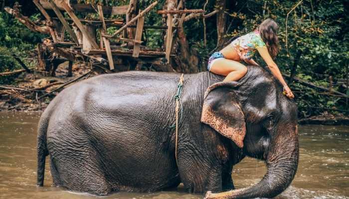 Santuario de elfantes na Tailância