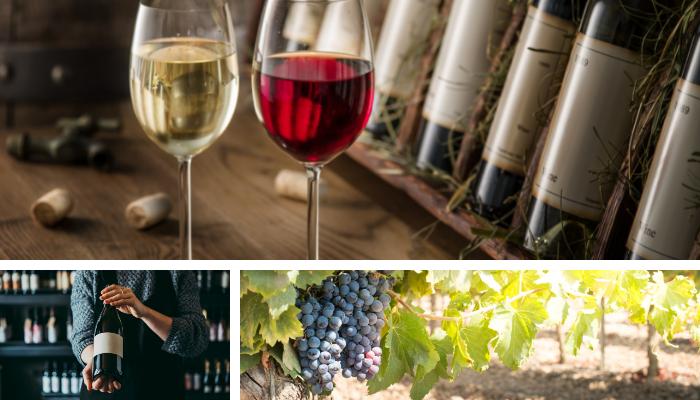 Visitar a rota de vinhos em Bordeus frança.png