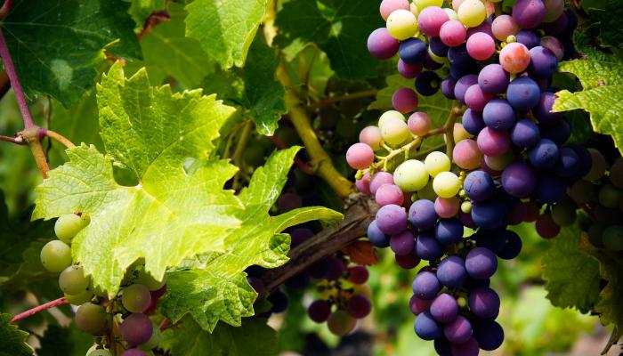 como encontrar um guia de vinhos barato na frança