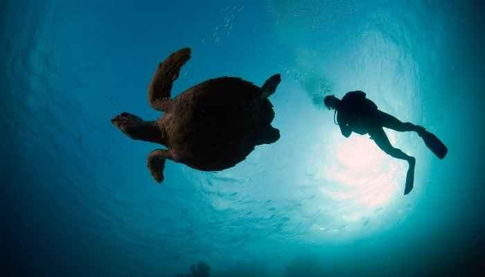 Mergulhos no fundo do oceano