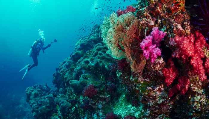 Visita A Grande Barreira de Coral na Austrália